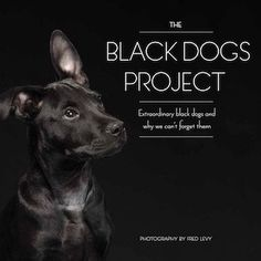 The Black Dogs Project: Extraordinary Black Dogs and Why We Cant Forget Them by Fred Levy 1631060880 9781631060885 Black Dog Syndrome, Pet Photographer, Book Themes, Dog Quotes, Portrait, Book Publishing, Rescue Dogs, Animal Rescue, Black Dogs
