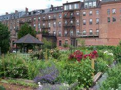 Vegetable gardens, Boston South End
