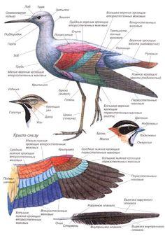 птицы россии книги - Поиск в Google   Птицы, Картинки и Дети