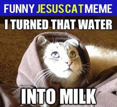 funny-jesus-cat-meme