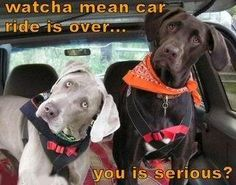 Funny dogs :)