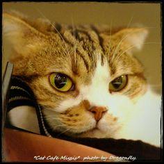 Is #cat grumpy or just nonplussed? #cameran #cameranapp @truedragonfly-#statigram