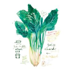 Mangold rustikale Küche Kunst, Gemüse-Plakat, print, französische Rezept grüne…