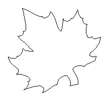 Large Maple Leaf Template