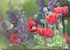 Susan Bourdet Poppies and Hummingbird
