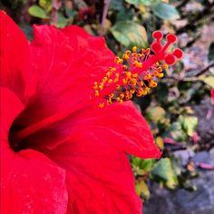 Madeira Island Flower www.meetmadeira.pt