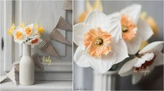 Daffodils & Narcissus from the Garden |  odile lm
