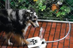 DIY Dog Water Fountain  Seeing that dog is man's best friend, it's only right that we do our best to keep our best friend equipped with all the latest gear and gadgets for pet.  #dogs