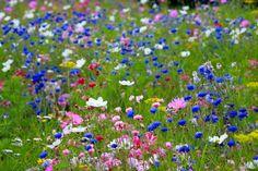 Hay muchas flores comestibles, pero en caso de duda es mejor no manipularlas.