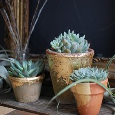 Gilded Terra Cotta Pots with Succulents