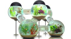 If we had this fish tank, I might consider getting fish, simply for the entertainment value!