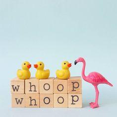 Whoop whoop...it's Friday!  #aflamingoaday #whoop #flamingo #friday #weekend #duck #flamingos #happycolors #love #friends