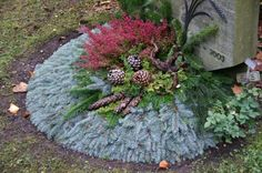 Grave decoration for autumn/winter. Contains heather 'Erica', pinecones and fir branches.