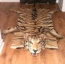 Real Tiger Skin Rug With Whiskers Taxidermy Unusual