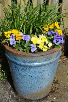Ants In Flower Pots: How To Get Rid Of Ants In Pots - Ants are one of the most prevalent insects in and around your home, so it isn't surprising that they find their way into your potted plants. Find out more about how to get rid of ants in pots here. Container Flowers, Container Plants, Container Gardening, Ants In Garden, Garden Pests, Outdoor Flowers, Outdoor Plants, Potted Plants, Balcony Flowers