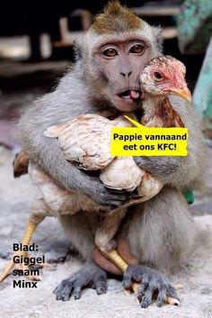 Lol funny animal captions AM, Wednesday May 2015 PDT) – 20 pics Animals And Pets, Funny Animals, Cute Animals, Animal Funnies, Party Animals, Animal Memes, Primates, Creepy Joe Biden, Animal Captions
