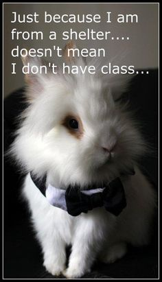 More class in your little bunny tail than the ignorant human who abandoned you has in their whole Selfish body. DP
