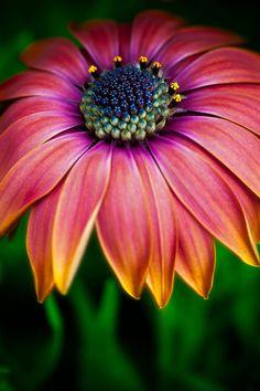 Love those colours! #flower