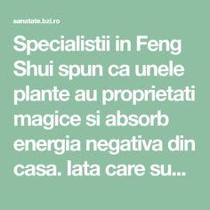 Specialistii in Feng Shui spun ca unele plante au proprietati magice si absorb energia negativa din casa. Iata care sunt acestea: