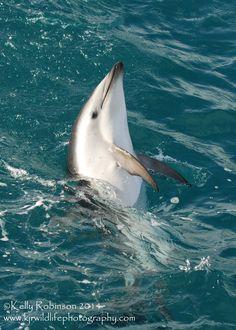 Dusky Dolphin Skyhop by Shadow-and-Flame-86 on DeviantArt