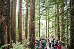 Stevens Pavillion Hoyt Arboretum Portland 457 For Full
