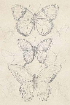 art sketchbook Vintage Butterfly Sketch I Canvas Artwork by June Erica Vess Art Sketches Art art sketches artwork Butterfly Canvas Erica June sketch sketchbook Vess Vintage Cool Art Drawings, Pencil Art Drawings, Art Drawings Sketches, Pretty Drawings, Tattoo Drawings, Tattoos, Fairy Drawings, Cool Sketches, Tattoo Sketches