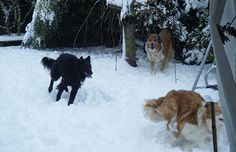 FROLICKING: Christchurch ... Rachel Heywood's three dogs loved playing in the snow.