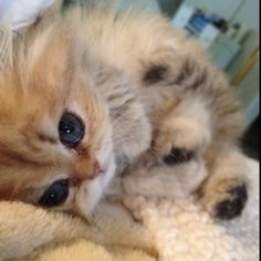 Baby Anime LilliPuss - This pic just melts My heart! / Oh wow, me too!!!