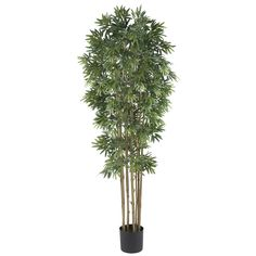 Standing strong at 6' tall, this Bamboo Japonica Silk Tree has densely packed grass-like leaves and 12 natural bamboo trunks. It's bold and beautiful.