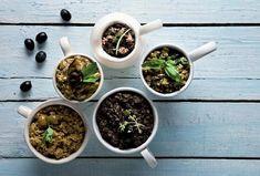 Olivová tapenáda ke grilovanému masu Succulents, Plants, Succulent Plants, Plant, Planets