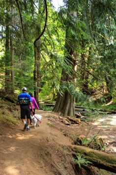Hiking - one of the many things to do on Orcas Island, Washington state. Read our list of 10 things to do on Orcas Island: http://mytanfeet.com/pacific-northwest/things-to-do-on-orcas-island-san-juan-islands/