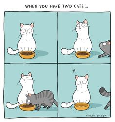 Applies to three cats too. Well, no matter how many cats you have, it will always apply Crazy Cat Lady, Crazy Cats, I Love Cats, Cute Cats, Kitten Baby, Cat Comics, Funny Comics, Curious Cat, Funny Illustration