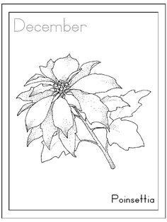 december poinsettia coloring pages - Coloring Pages Beautiful Angels