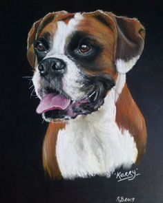 A portrait of Kerry, a Boxer dog. Pet portrait created with soft pastels on black paper. www.ruthbradyart.com