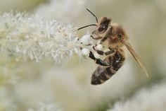 Découvrez l'intelligence des abeilles, qui savent compter et même reconnaître un visage humain !
