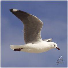 Streamzoo photo - Freedom Freedom, Bird, Photography, Animals, Liberty, Animales, Political Freedom, Animaux, Photograph