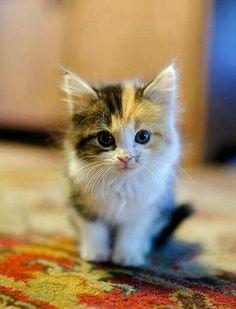 Even tiny kittens like AND need Crunchease hemp treats! Go to barkingtreedogsupply.com today.