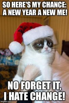 Grumpy Cat Christmas www.catsandkittensbreeds.com