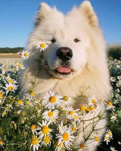 ✔ Chiens et chiots mignons Unique . Cute Baby Animals, Animals And Pets, Funny Animals, Cute Dogs And Puppies, I Love Dogs, Doggies, Puppies Puppies, Baby Dogs, Puppy Love