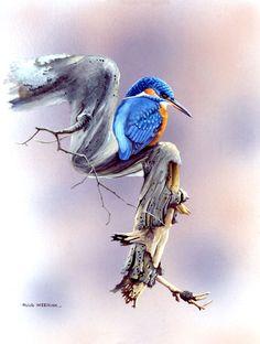 Ruud Weenink watercolor of a King Fisher - so sweet!