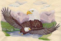 Bald Eagle Scene