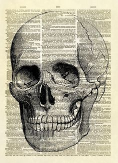 "This print features a medical illustration of a human skull from the book ""Our bodies and How We Live"" published in He's perfect for a doctor's office, a medical student, or Halloween decor! Male Figure Drawing, Figure Drawing Reference, Anatomy Reference, Anatomy Drawing, Anatomy Art, Medical Art, Vintage Medical, Dictionary Art, Vintage Art Prints"