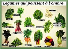 Les meilleurs légumes à faire pousser à l'ombre
