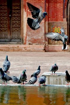Flight of the pigeons-1    This picture was taken at the Wazir Khan Mosque, Pakistan
