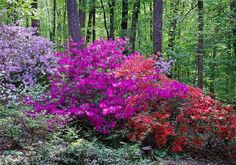 another route for easy care woodland garden once cleaned out are azaleas and rhododendron. Deer proof, easy, lovely.
