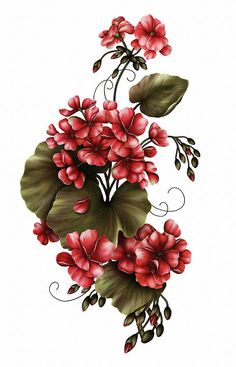 Red Geraniums On White Mixed Media by Georgiana Romanovna Botanical Flowers, Flowers Nature, Tropical Flowers, Small Flowers, Botanical Prints, Beautiful Flowers, Victorian Flowers, Vintage Flowers, Flower Art Images