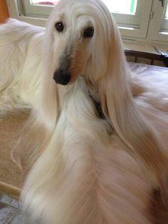 Beautiful blond ....