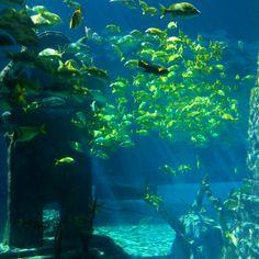 The Dig. Atlantis, Paradise Island, Bahamas.