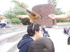 Ayudame! el águila me secuestra!