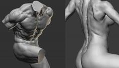Image result for male torso back